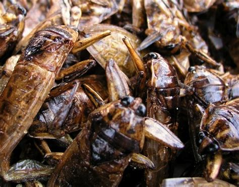 cockroach infestation greenpestcontrolmns blog