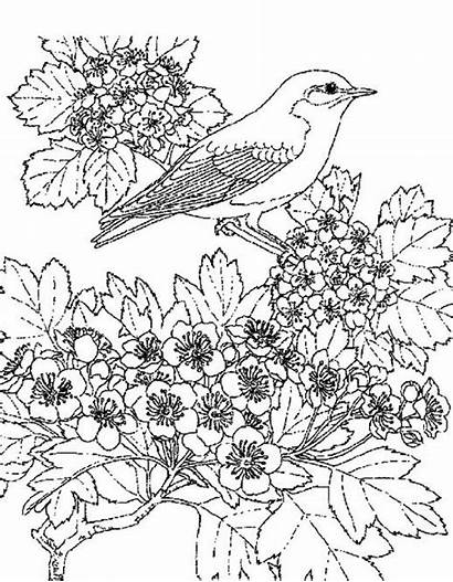Coloring Pages Scenic Flower Adult Bird Winter