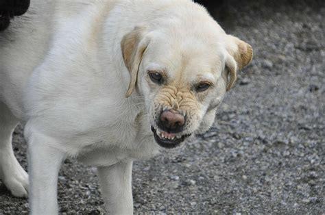 dog breed    bite  revealed