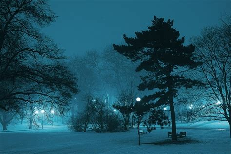 city trees suffer     sleep treehugger