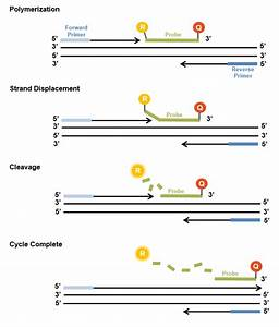 Custom qPCr Probes - Microsynth - CH