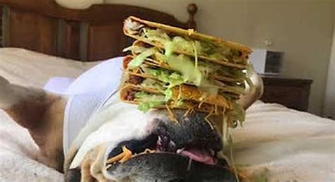 This Dog Is So Passed The Fuck Out It Wont Wake Up For Tacos Digg