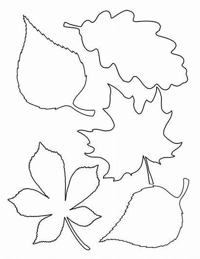 Leaf Printable Leaves Stencils Fall Template Templates