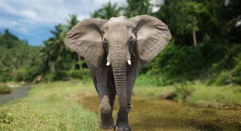 elephants elephant pictures