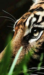 Idea by Alex on Refremces | Animals beautiful, Sumatran ...