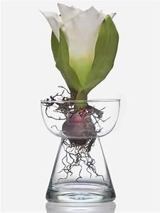 Amaryllis In Der Vase : glasvase amaryllis hyazinthenglas vase glas blumenvase ~ Lizthompson.info Haus und Dekorationen