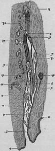 Follicular Mange  Demodex Folliculorum  In Cats