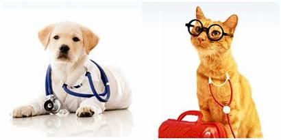 Sick Pet Pets Uber Geekwire Vets Health