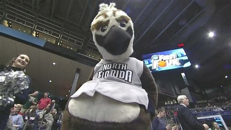 ozzie  osprey    sexual mascot   ncaa