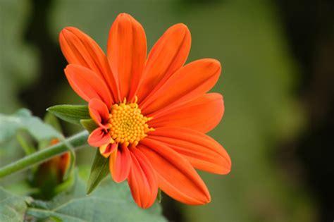 flower to bloom flowers need dark period to bloom aerogarden blog