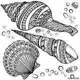 Coloring Seashell Pages Sea Mandala Seashells Drawing Shell Shells Zentangle Shutterstock Designs Patterns Colouring Adults Pretty Fotolia Isolated Decorative Background sketch template