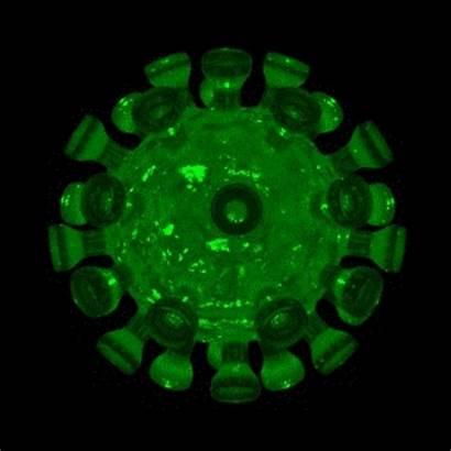 Corona Covid Virus Coronavirus V3