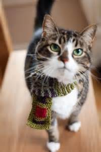 Kitty Cat Scarf