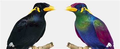 do birds see color 10 exles of how animals see images that show us the