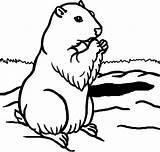 Coloring Groundhog Mewarnai Gambar Marmotte Kumpulan Unicorn Animaux Marmota Dessin sketch template