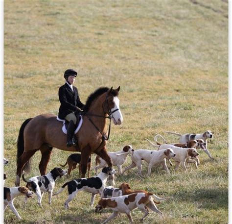 horses hunt hunting fox hounds horse equestrian
