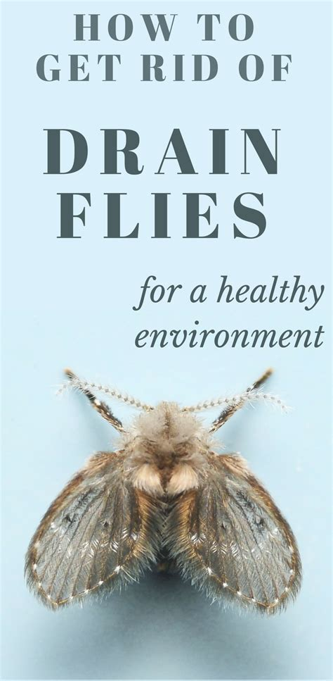 How To Get Rid Of Drain Flies For A Healthy Environment