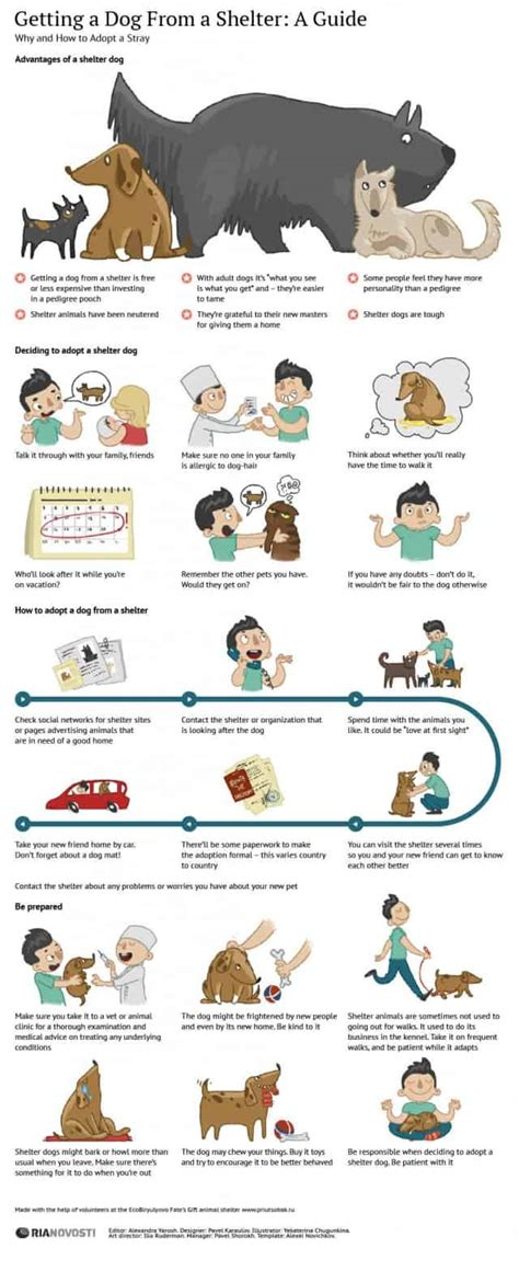 guide  adopting  shelter dog infographic daily