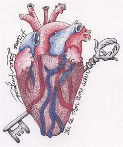 DeviantArt: More Like Anatomical Heart Tattoo by ...