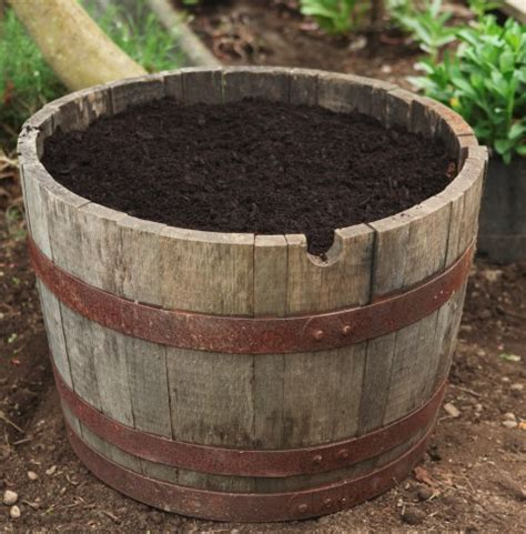 wine barrel planters lettuce in a wine barrel garden therapy
