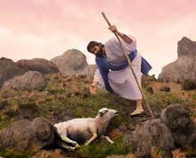 How Do Sheep Get Lostand Then Found St Mark Lutheran