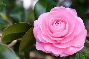 Signification des 10 couleurs de roses et 15 fleurs populaires for Quelle couleur avec le bleu 6 la signification des roses quelle couleur de roses offrir