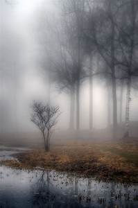 88 best Misty and foggy scenes images on Pinterest