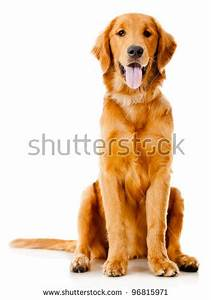 Dog stock images royalty free images vectors shutterstock for Be a dog sitter
