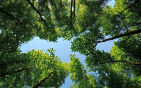 Green Tree Hd Wallpaper by Green Tree Top Hd Desktop Wallpapers 4k Hd