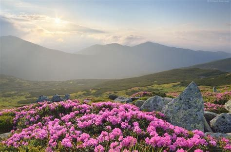 perspective cuisine flowering carpathians chornohora mountain range travel