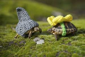 Vancouver woman's Etsy business combines love of tortoises ...