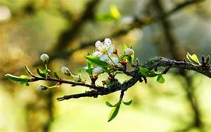 배경 화면 나뭇가지에 따뜻한 봄 하얀 꽃 1920x1200 HD 그림, 이미지
