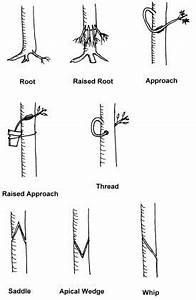 22 best images about just for info on pinterest bonsai With wiring bonsai roots