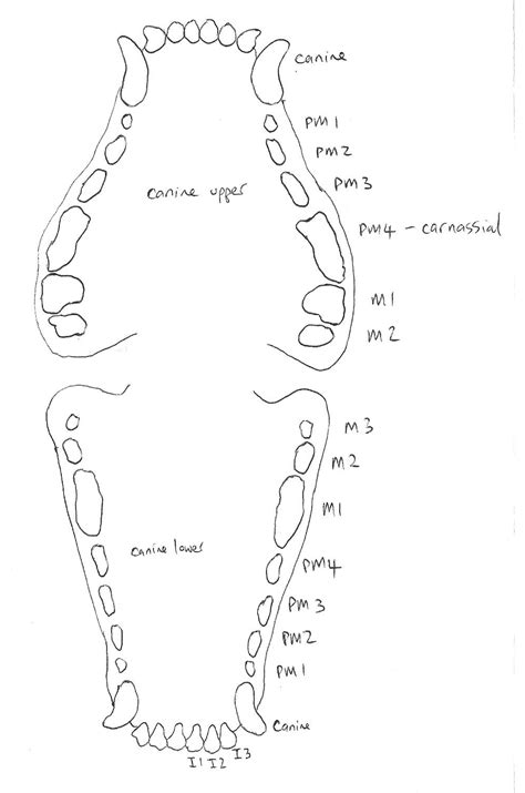 case report mandibular fracture repair