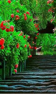 Download free 3d nature wallpaper for your pc   Spring ...