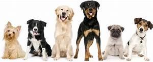 Cani di razza dalla s z