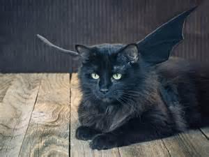 bat cat costume 18 diy pet costumes for 171 laurelwood animal hospital