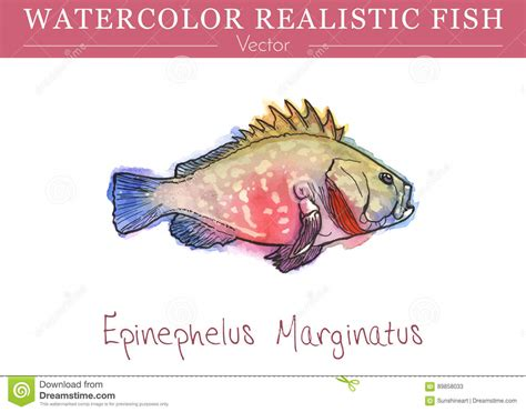 edible fish vector watercolor painted hand grouper preview