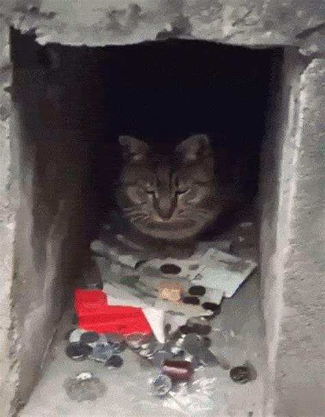 cats       money  pics  gifs