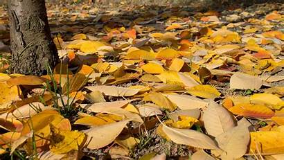 Ground Leaves Yellow Orange Leaf Nature Fall