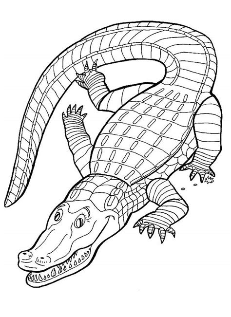 printable alligator coloring pages  kids