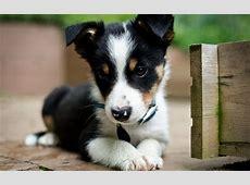Puppy Windows 10 Theme themepackme