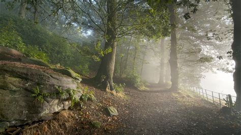 Awesome Forest Road 36165 1920x1080 Px Hdwallsourcecom