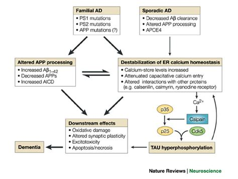 alzheimer disease humpathcom human pathology