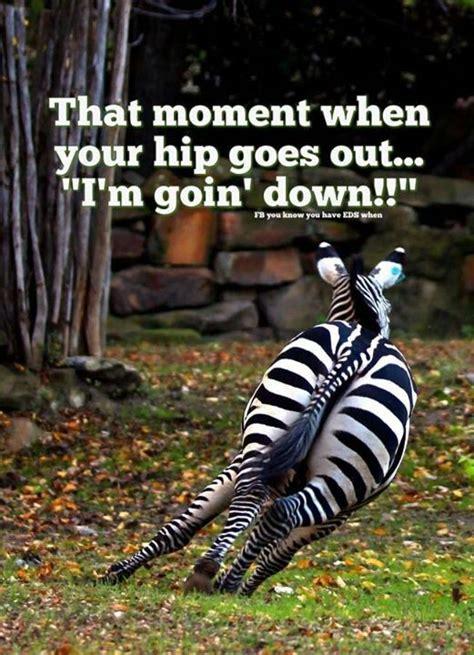 hip replacement funny pain humor hole chronic knee fracture fatigue funnies syndrome blame fibromyalgia horse zebra cartoon surgery haha zebras
