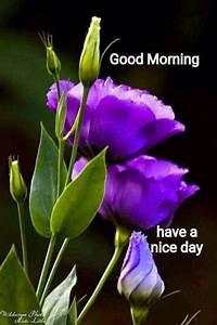 461 best Good morning.. images on Pinterest | Morning ...