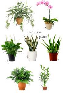 express o winter home bathroom plants