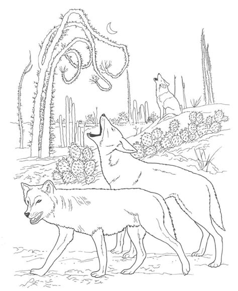 printable coyote coloring pages  kids