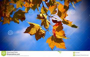 Fall leaves stock image. Image of blue, fall, branches ...