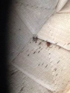 why are college students at high risk for bed bugs With bed bugs in college